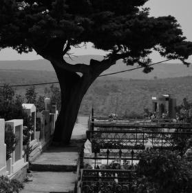 smuteční strom