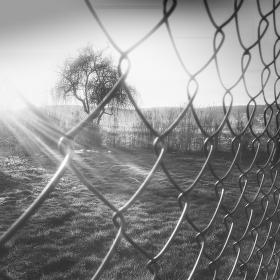 Pohled přes plot