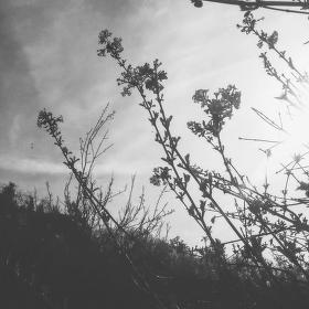 Pohled skrze větve