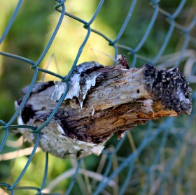 V plotě
