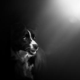 Osvícená