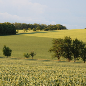 Večerní pole