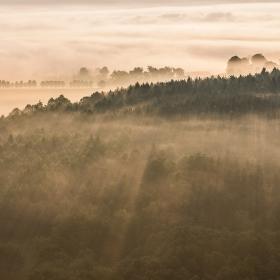 Paprsky nad lesem