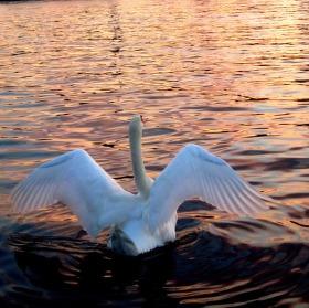 Roztáhni křídla a leť!