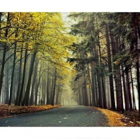 Podzim v lesích u Zátok