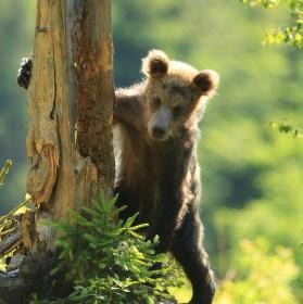 Medvídě....
