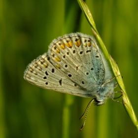 Motýl na stéble