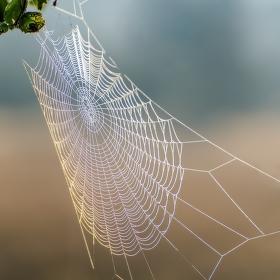 Pavoučí nástraha