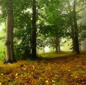 V mlhavém lese