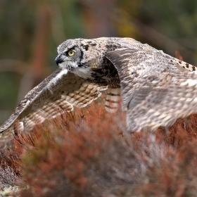 Snake flight II