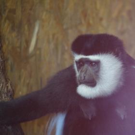 Monkey #2