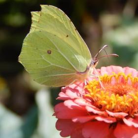 Motýl na Cínii.