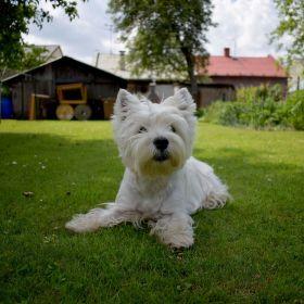 můj přítel pes