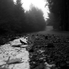 Cesta do zapomnění