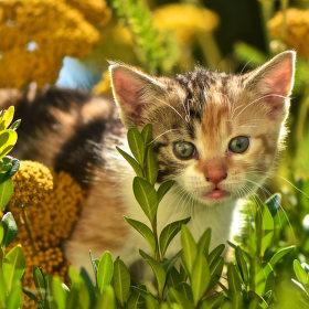 Kočičí portrét