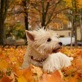 Podzim je čaroděj