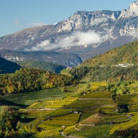 Vinice v Itálii