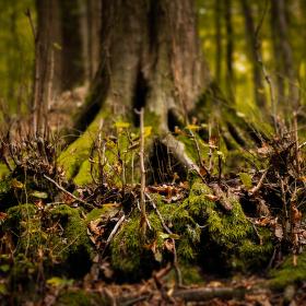 Lesné čaro
