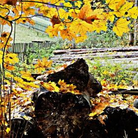 Podzimní motiv