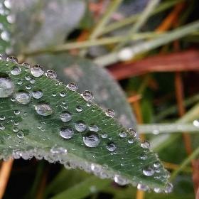 Korálky kapek při dešti