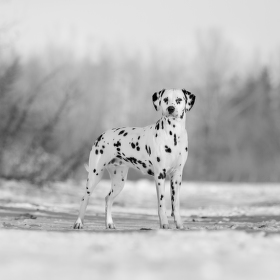 Spots and Snow