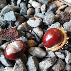 kaštany v kamení