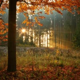 Průsvit lesem