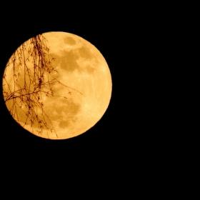 Měsíc za stromem