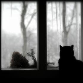 Kočičí rozjímání
