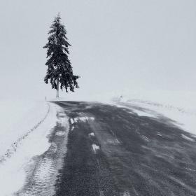 Cestou za smrkem