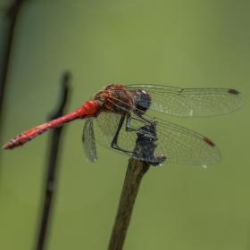 Hmyzák