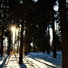 Kdesi v lese.....