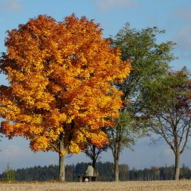 Pod křídlem stromu