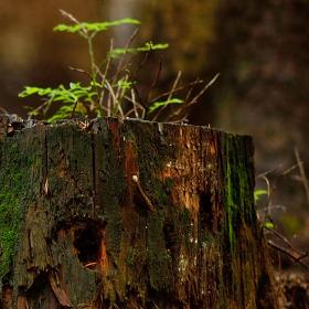 Kdo se bojí, nesmí do lesa!