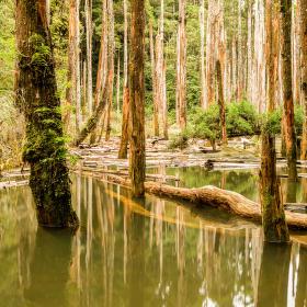 Zatopený les