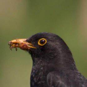Ptačí promenáda