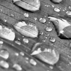 ..Déšť pohladil lístečky rostliny..