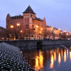 holubí ráj v Praze