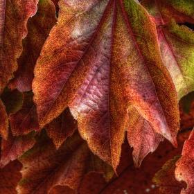 Podzimní barvení