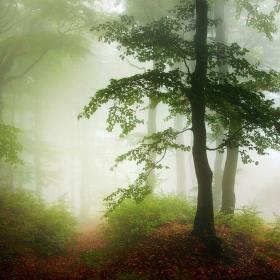 ...když v lese svítá