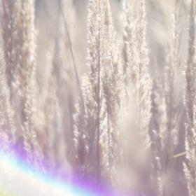 Světlo v trávě