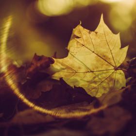 ohnivý podzim