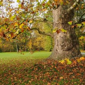 U starého stromu...