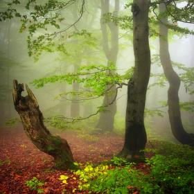 ...romantika lesní