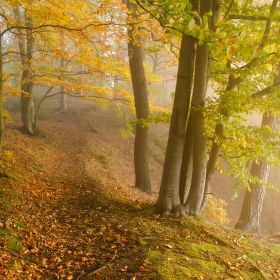 V zajetí mlhy a světla