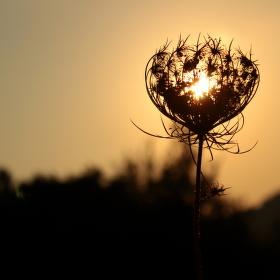 Sluneční doteky