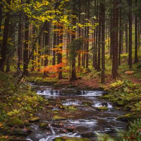 Podzimní Bystrý potok