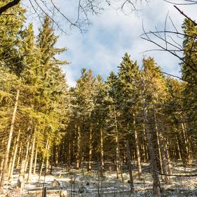 Slunce v zimním lese