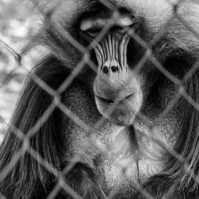 V zoo ...