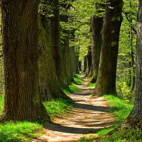 Stromořadí .